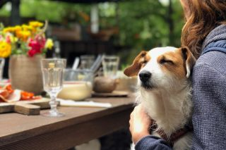Dog Friendly Restaurants In Durban